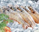HOSO Vanamei Shrimp