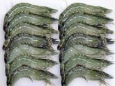 HOSO Black Tiger Shrimp